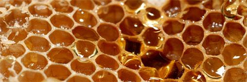 Le Miel de Manuka ; le nouveau soin naturel – Manuka Honey; the new natural care –